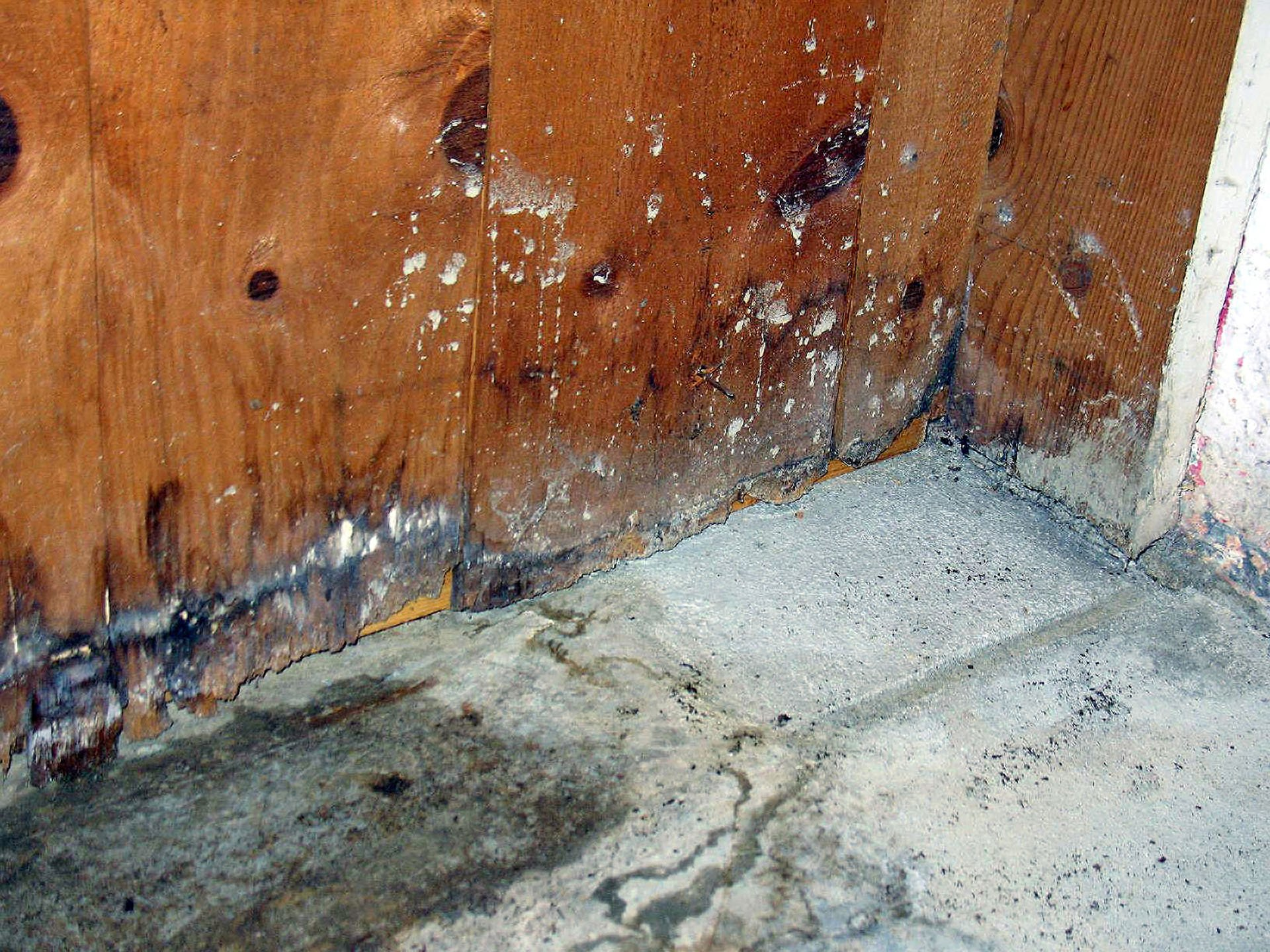 How to Avoid Water Damage in Hollywood this Hurricane Season